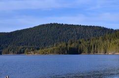 Lasowy otaczanie sztuczny jezioro Zdjęcia Stock