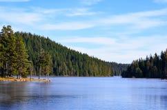 Lasowy otaczanie sztuczny jezioro Zdjęcie Stock