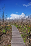 lasowy palący footpath Obraz Royalty Free