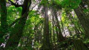 Lasowy pełny z drzewami i światłem słonecznym w Nikko, Japonia Obrazy Royalty Free