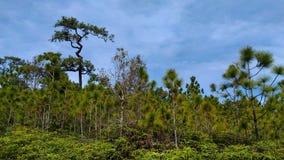 Lasowy phu kradung loei Thailand Zdjęcia Stock