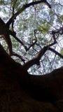 Lasowy piękno Zdjęcia Stock