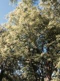 Lasowy piękno Obraz Royalty Free