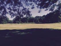 Lasowy piękno Zdjęcie Stock