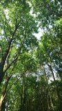 Lasowy położenie Obrazy Royalty Free