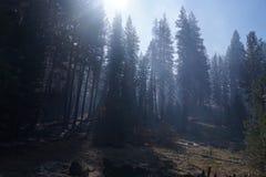 Lasowy pożar obraz royalty free