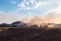 Lasowy pożar Płonący pole sucha trawa i drzewa Ciężki dym przeciw niebieskiemu niebu Dzika pożarnicza opłata gorąca wietrzna pogo zdjęcia royalty free