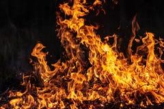 Lasowy pożar przy noc całym terenem zakrywającym płomieniem i chmury zmrok dymimy Zniekształcający szczegółu należny wysokotemper obrazy royalty free