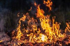Lasowy pożar przy noc całym terenem zakrywającym płomieniem i chmury zmrok dymimy Zniekształcający szczegółu należny wysokotemper obrazy stock