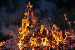 Lasowy pożar przy noc całym terenem zakrywającym płomieniem i chmury zmrok dymimy Zniekształcający szczegółu należny wysokotemper fotografia stock