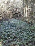 Lasowy podłogowy pełny winogrady Obraz Stock