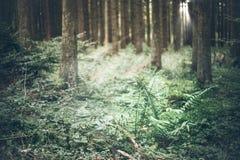 Lasowy porośle zdjęcia stock
