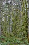 Lasowy porośle fotografia stock