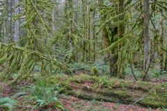 Lasowy porośle zdjęcie stock