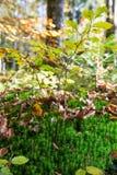 Lasowy porośle i Spadać liście na Pogodnym jesień dniu fotografia royalty free