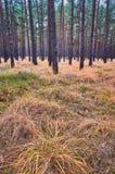 Lasowy porośle w jesieni zdjęcie stock