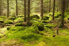 lasowy pradawny obrazy royalty free