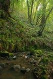 lasowy prehistoryczny deszcz Fotografia Stock