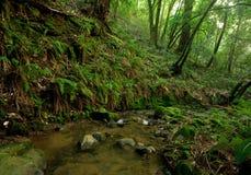 lasowy prehistoryczny deszcz Zdjęcia Royalty Free