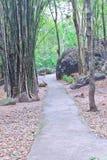 lasowy przejście Zdjęcia Stock
