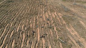 Lasowy przywr?cenie Ekologii konserwacja Powietrzna strzelanina zbiory wideo