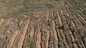 Lasowy przywr?cenie Ekologii konserwacja Powietrzna strzelanina zbiory