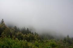Lasowy Redwood park narodowy, Kalifornia usa Zdjęcia Royalty Free