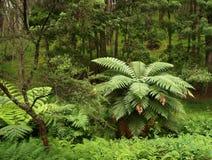lasowy rodzimy nowy Zealand Zdjęcie Royalty Free
