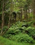 lasowy rodzimy nowy Zealand Obrazy Royalty Free