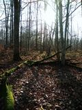 Lasowy Rosja zdjęcie stock