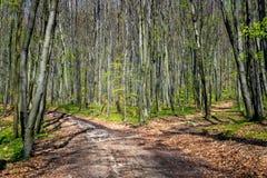 Lasowy rozdroże fotografia royalty free