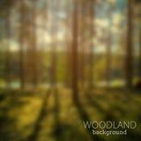Lasowy rozmyty foto fotografia stock