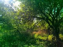 Lasowy słońce krajobraz obrazy royalty free