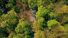 Lasowy samochodowy drogowy chył zbiory wideo