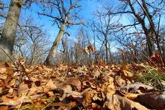 Lasowy sceneria krajobraz Illinois Obraz Royalty Free