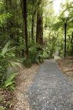 lasowy sceniczny ślad Zdjęcie Royalty Free