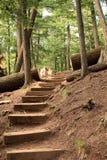 lasowy schody Obraz Stock