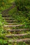 Lasowy schody Zdjęcia Royalty Free