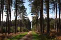 lasowy sherwood obraz royalty free