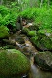lasowy skalisty strumień Zdjęcia Royalty Free