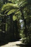 Lasowy spacer 6 Zdjęcia Royalty Free