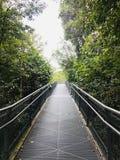 Lasowy spacer Singapur zdjęcie royalty free