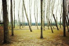 Lasowy spadek Obrazy Stock
