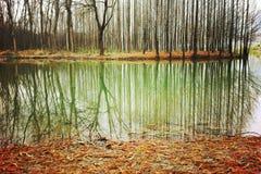 Lasowy spadek Zdjęcia Royalty Free
