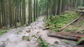 lasowy sposób fotografia royalty free