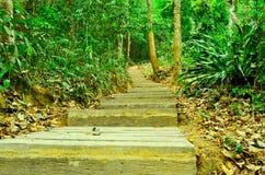 lasowy sposób Zdjęcie Royalty Free