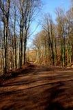 Lasowy sposób Zdjęcie Stock