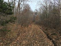 Lasowy sposób, drzewa las jesieni Obrazy Royalty Free