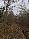 Lasowy sposób, drzewa las jesieni Obraz Stock