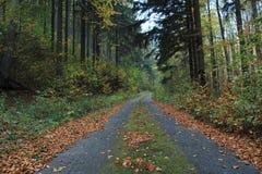 Lasowy sposób w Czechia zdjęcie stock